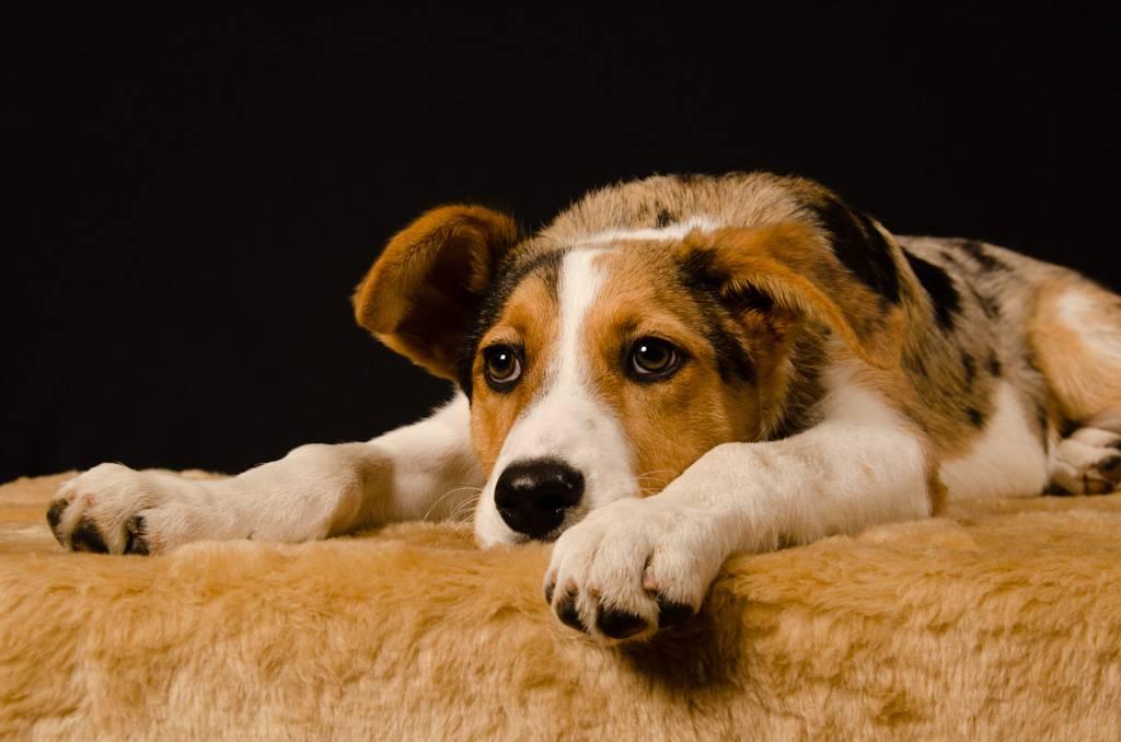 fotostudio-sep-dierenfotografie.jpg